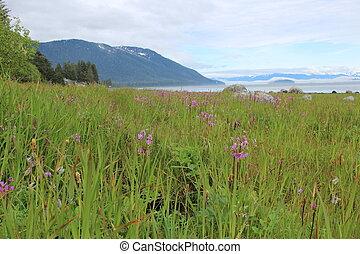 Alaska Island Landscape
