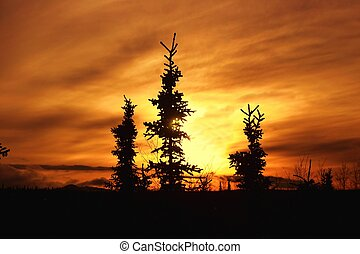 Alaska Winter Sunset - Sitka spruce are silhouetted by a...
