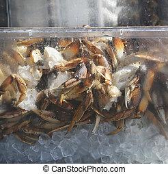 Alaskan King Crab On Ice