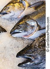Alaskan King Salmon Fish on Ice Fishmongers Market