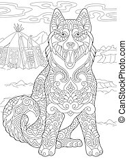 Siberian Husky dog - Alaskan Malamute or Siberian Husky dog ...