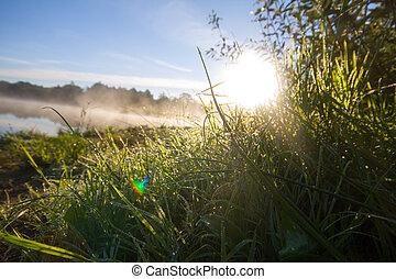 alba, in, nebbia, su, il, lago, shines, rugiada