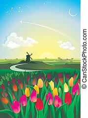 alba, su, il, valle, con, tulips, e, mulino