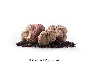 Alba white truffle tuber on isolated white background