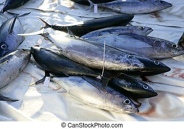 Albacore bloody tuna sport fisherman catch Medditerranean ...