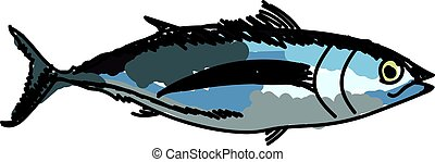 Albacore fish, illustration, vector on white background.