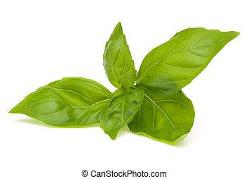 albahaca, dulce, hojas
