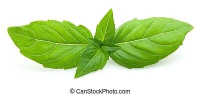 albahaca, fresco, hojas