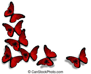 Albanian flag butterflies, isolated on white background