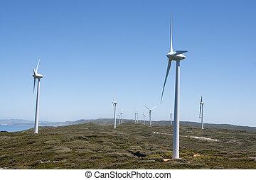 Albany: windmill park