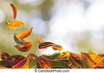 albaricoque, hojas, caer