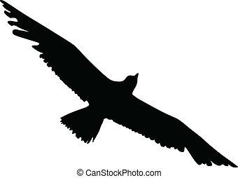 albatros, silhouette