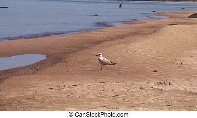 Albatross on beach in sunny day