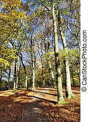 alberi autunno, a, talkin, tarn, parco paese