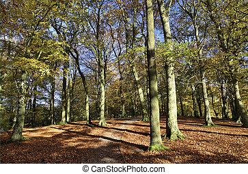alberi autunno, in, talkin, tarn, parco paese