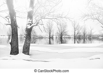 alberi inverno, coperto gelo