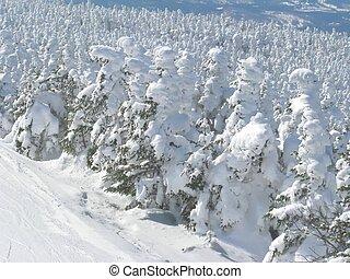 alberi nevosi