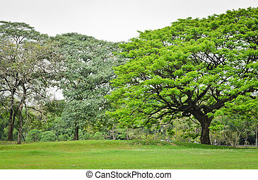 alberi verdi