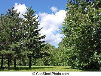 alberi verdi, e, cielo nuvoloso