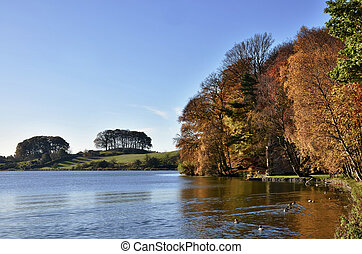 albero, a, talkin, tarn, su, un, autunno, day.