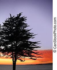 albero, a, tramonto