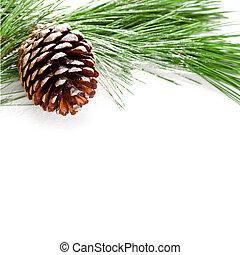 albero abete, ramo, pinecone