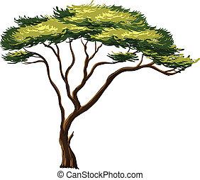 albero, africano