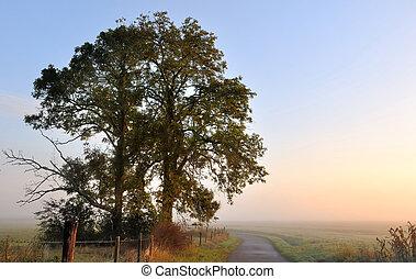 albero, alba, silhouette