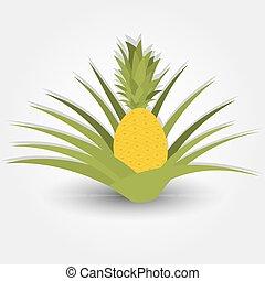 Fruttivendolo vegetables frutte standing appartamento for Albero di ananas