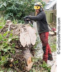 albero., arborist, fare pezzi