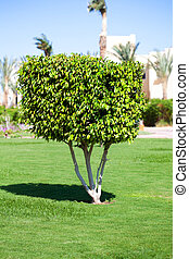 albero, arbusto, giardino, uno