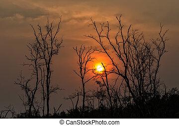 albero, b, silhouette, sole