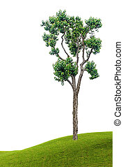 albero, bianco, fondo