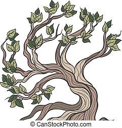albero bonsai, isolato