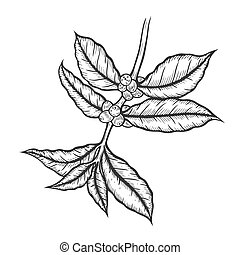 albero caffè, illustration.