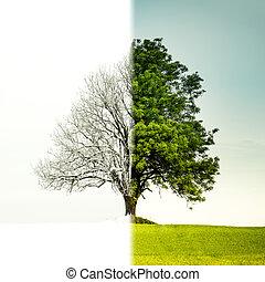 albero, cambiamento, da, inverno, a, estate