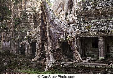 albero, can, tempio, spung, preah