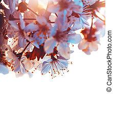 albero ciliegia, azzurramento, bordo