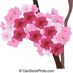 albero ciliegia, ramo