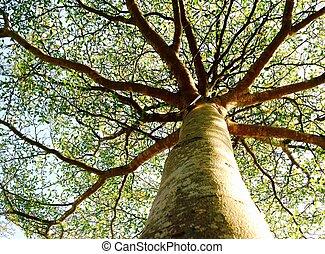 albero, con, cielo, sullo sfondo