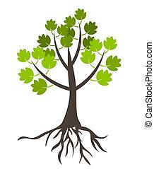 albero, con, radici