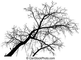 albero, contro, cielo