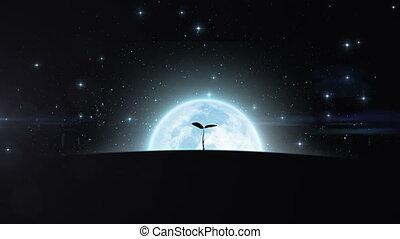 albero, crescente, sotto, il, moon., hd, 108