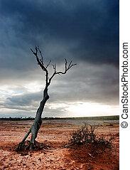 albero, deserto, morto