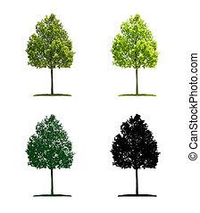 albero, differente, -, quercia, giovane, illustrazione, quattro, tecnica
