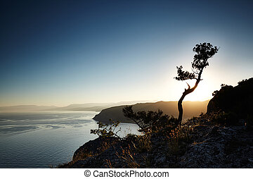 albero, e, mare, a, sunset., crimea, paesaggio
