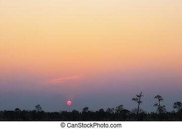 albero, evening., silhouette, tramonto