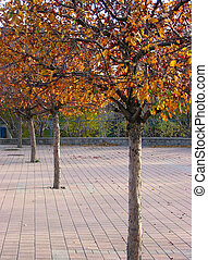 albero, fila