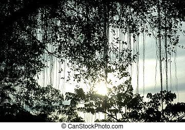 albero, foglie, banyan, silhouette