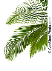 albero, foglie, palma